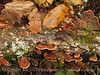 Fungi, Black Rock Mt St Park GA (4)