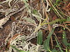 Strange fungus, Morro Bay CA (3)