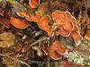 Fungi, Black Rock Mt St Park GA (6)