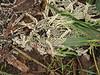 Strange fungus, Morro Bay CA (1)