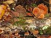 Fungi, Black Rock Mt St Park GA (5)