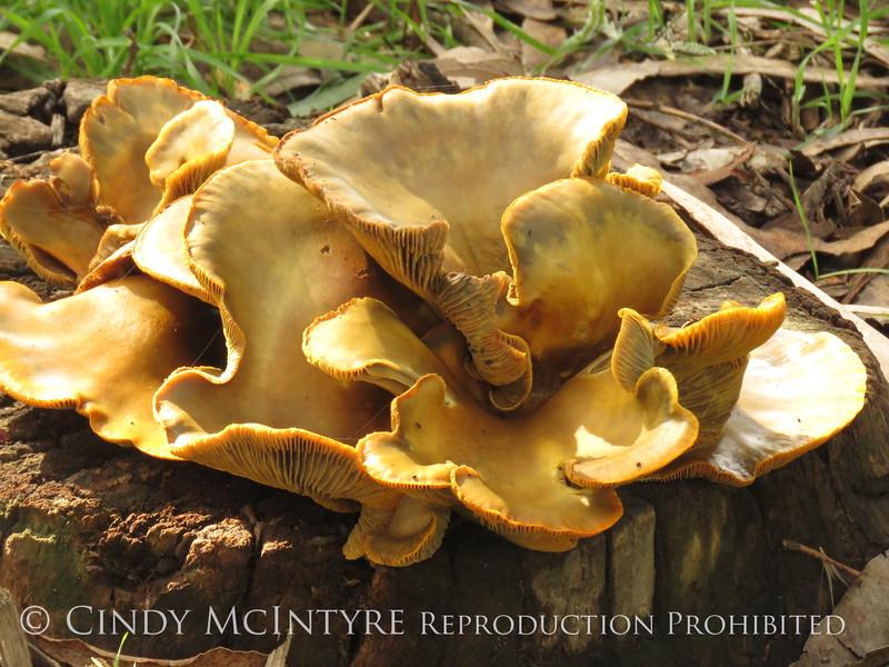 Big fungus, Morro Bay CA (1)