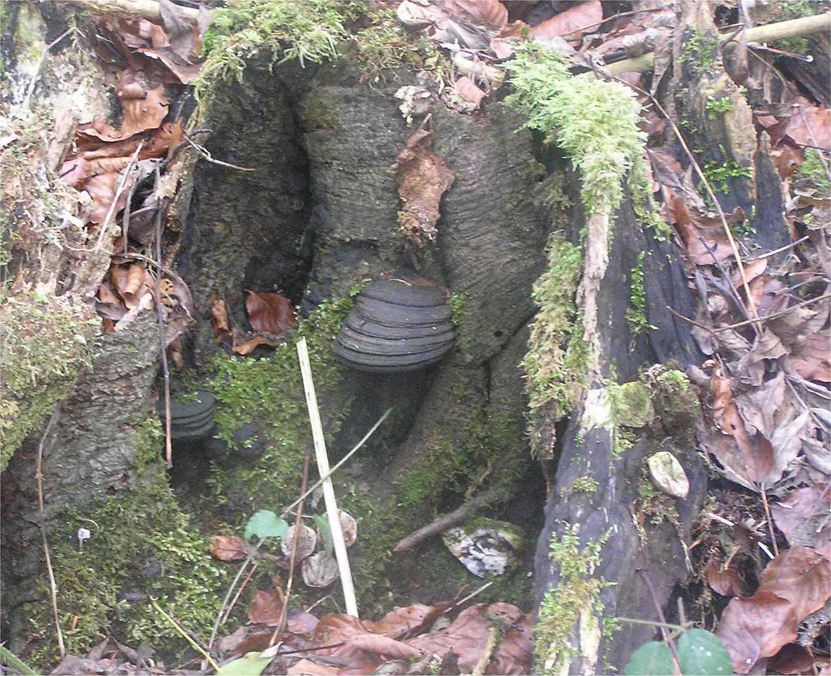 Funghi2_Chilterns_Feb2006