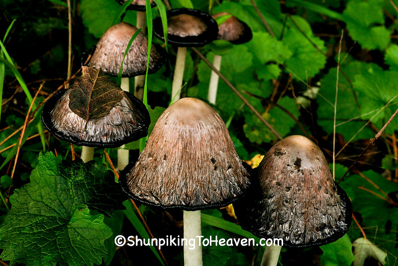 September Mushrooms, Eau Claire County, Wisconsin