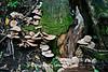 Autumn Mushrooms, Dane County, Wisconsin