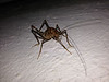 Funky bug. Part cricket, part snail.  Hops like a cricket.