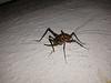 Bug photo 2
