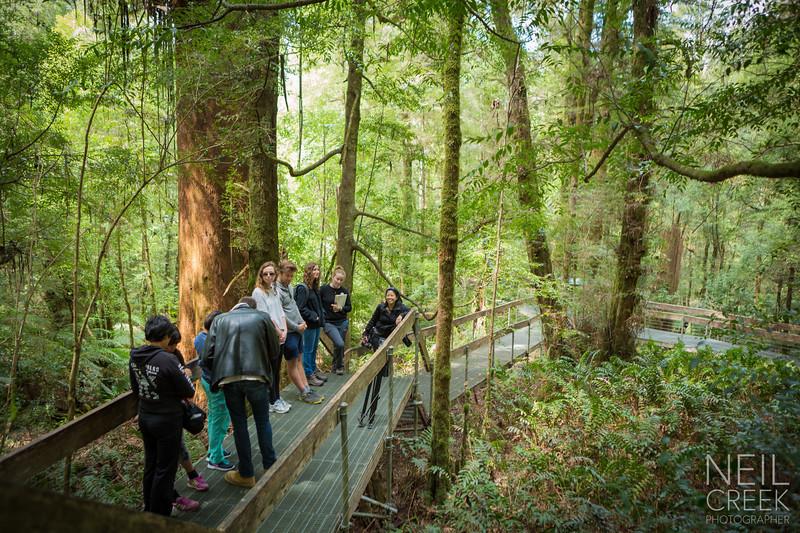 creek-141025-242.jpg