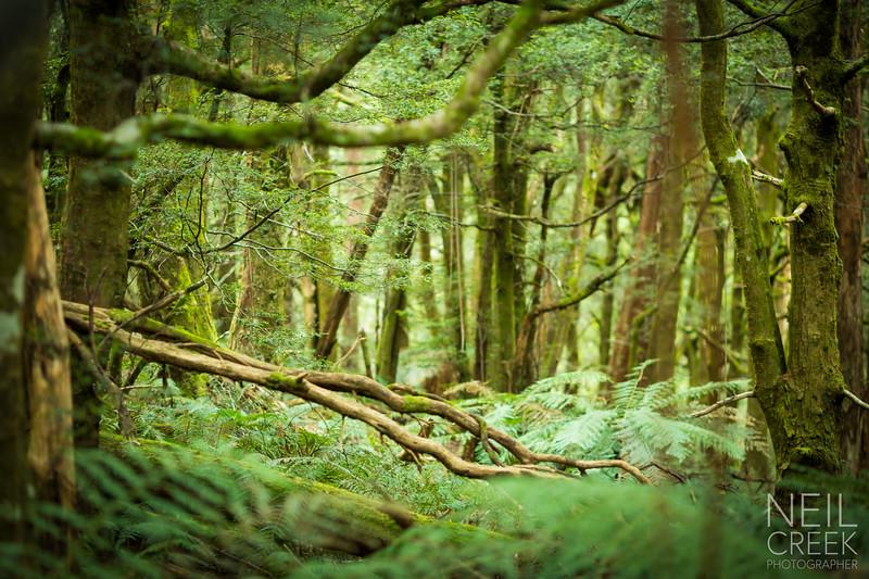 creek-141025-357.jpg