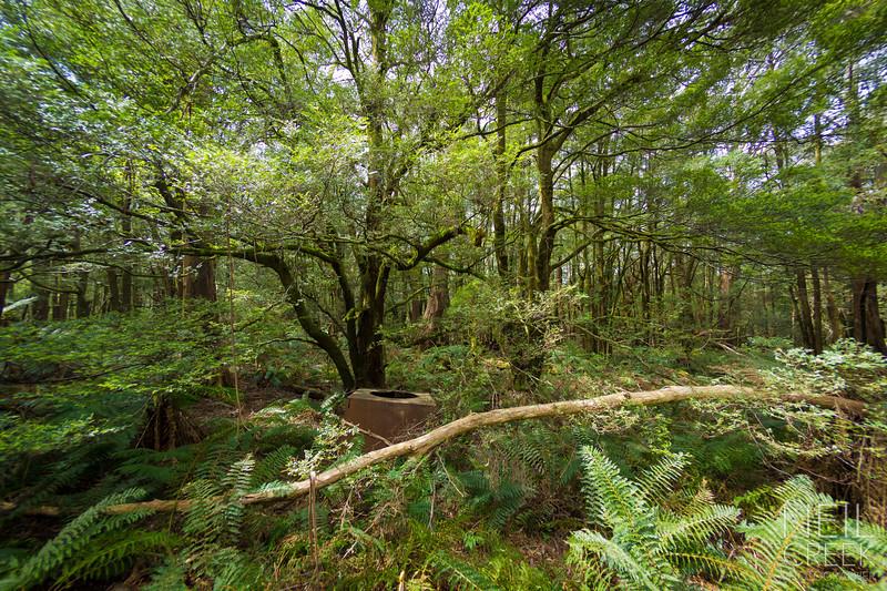 creek-141025-421.jpg