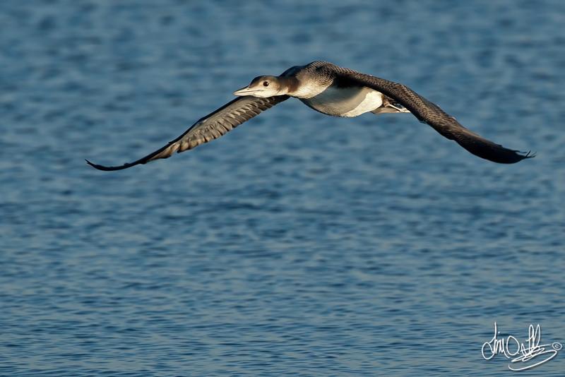 Loon In-Flight