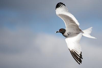 Galapagos 2008: Birds