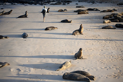 Beach with sea lions and humans