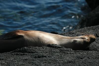 Sea lion relaxing