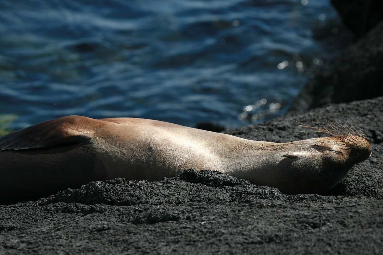 Sea lion relaxing