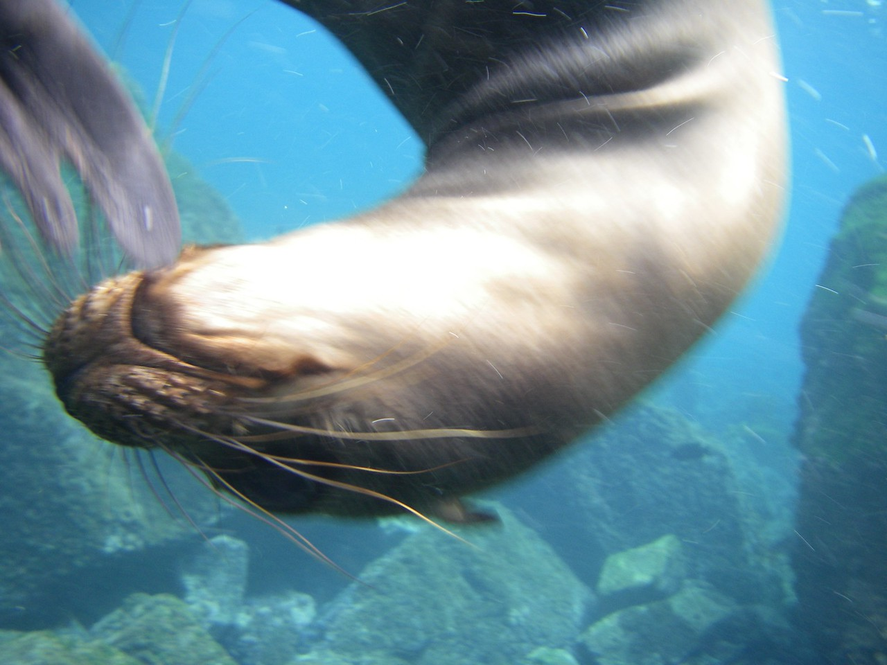 Sea lions getting very close