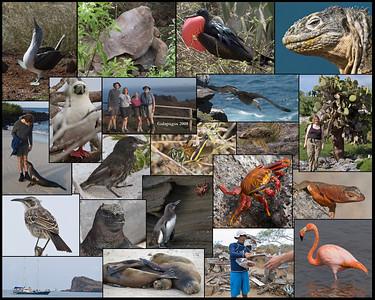 Galapagos Montage