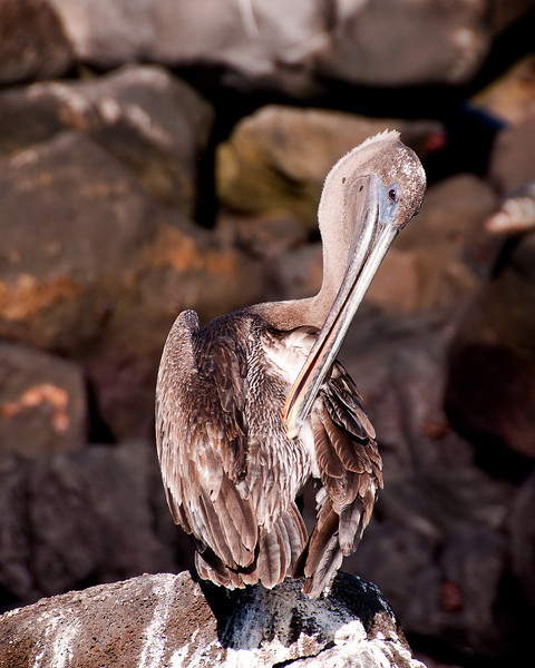 Galapagos-18
