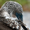 Galapagos-28
