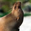 Galapagos-4