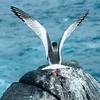 Galapagos-44