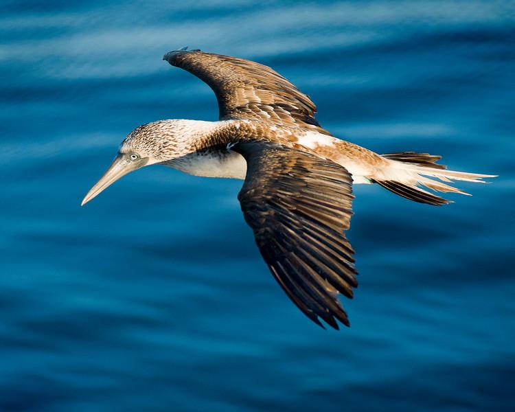 Galapagos-65