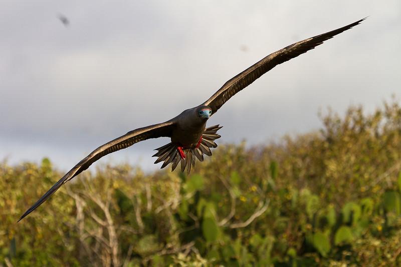 Galapagos trip