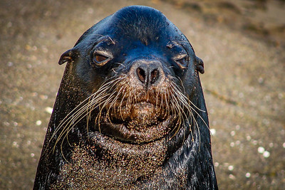 What you lookin at?..... Galapagos Islands