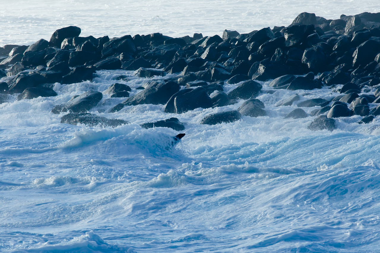 If you look closely you can see a Sea Lion leaping out of the wave in the middle of the shot