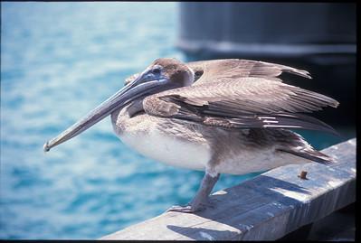 Galapagos2002-085