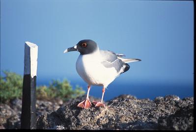 Galapagos2002-091