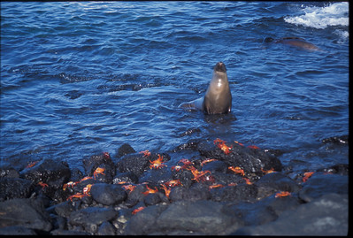 Galapagos2002-088