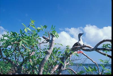 Galapagos2002-108