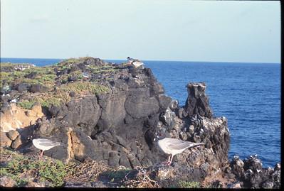 Galapagos2002-093