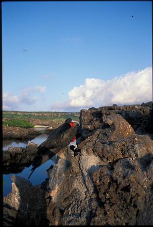Galapagos2002-111