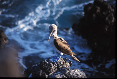 Galapagos2002-092