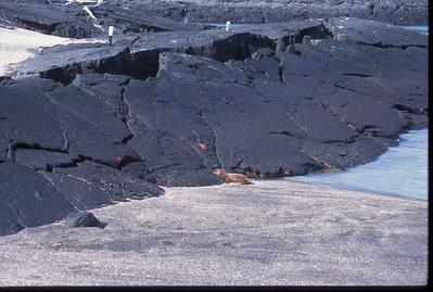 Galapagos2002-117