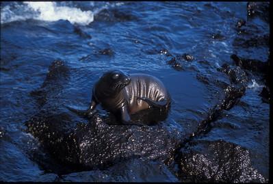 Galapagos2002-086