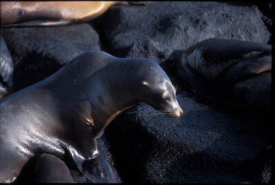 Galapagos2002-087