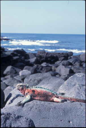 Galapagos2002-096