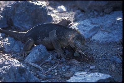 Galapagos2002-089