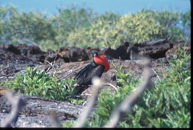 Galapagos2002-106