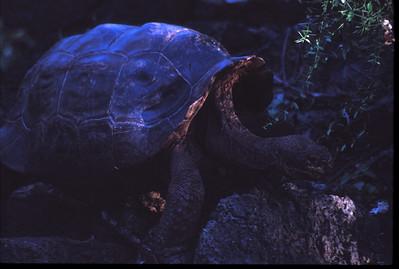 Galapagos2002-104