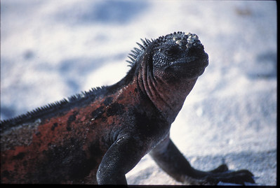 Galapagos2002-094