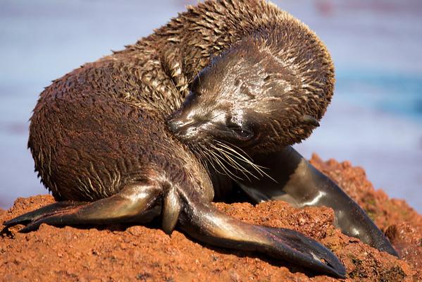 Baby sea lion.