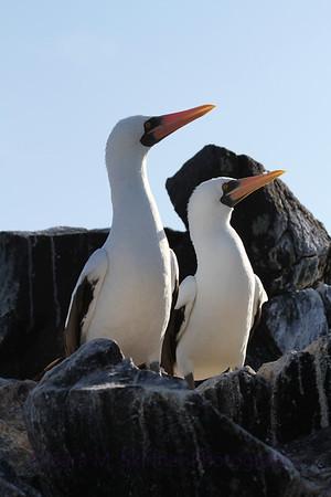Galapagos (64)