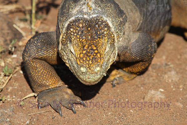 Galapagos (34)
