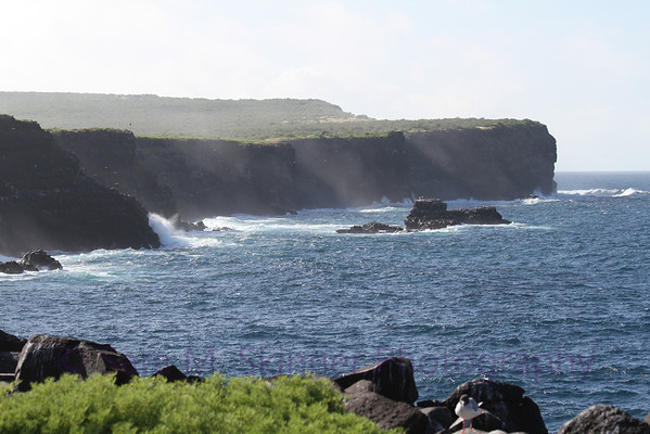 Galapagos (70)
