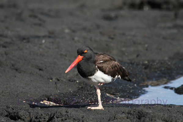 Galapagos (20)