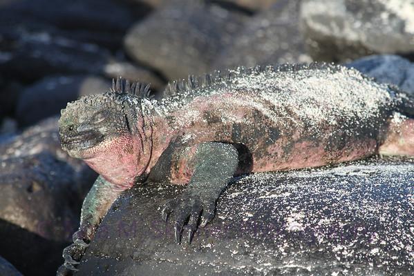 Galapagos (60)